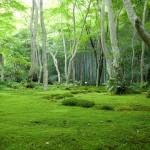 Japonya'dan Manzaralar