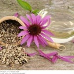 ekinezya bitkisi hedza